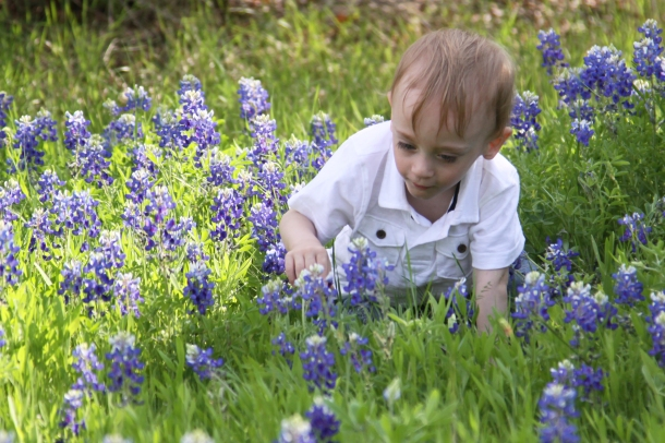 Looking at Bluebonnets