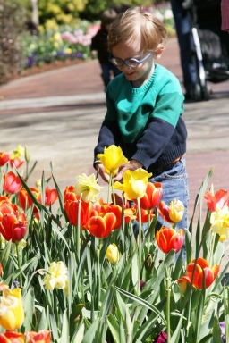 James and the tulips