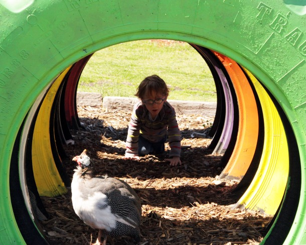 crawl tube, The Gentle Zoo