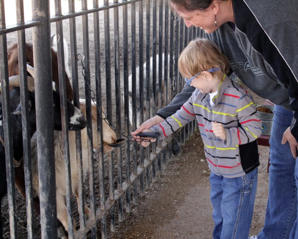 Feeding, The Gentle Zoo