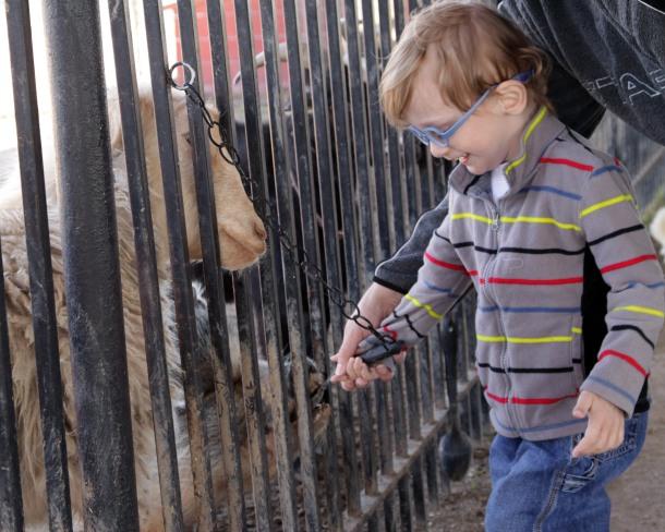 Feeding a Pig, Gentle Zoo